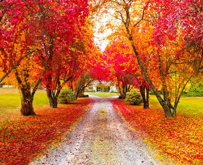 New-Zealand-Autumn-Leaves
