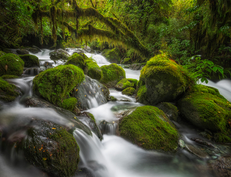 New-Zealand-Landscape-Photography-Forest