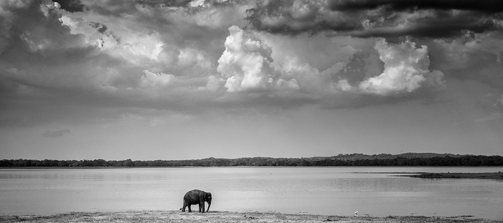 Sri Lanka Elephant Wildlife Photography