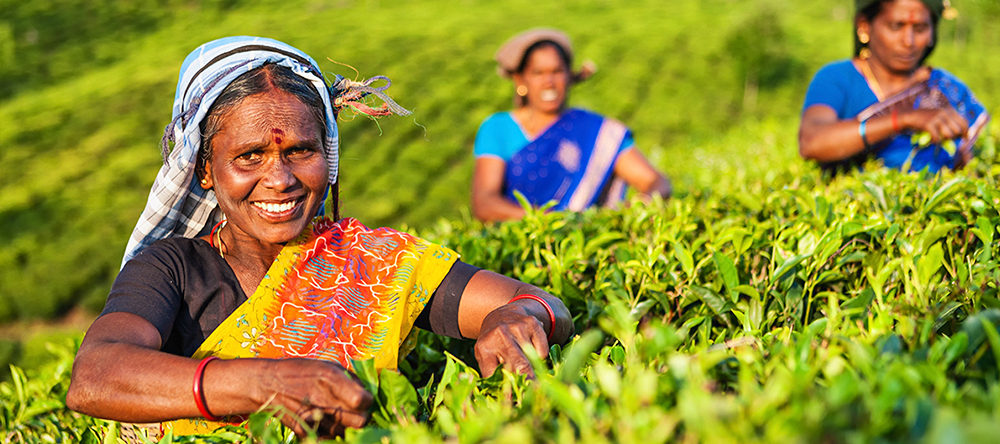 Sri Lanka Tea Plantations Photography